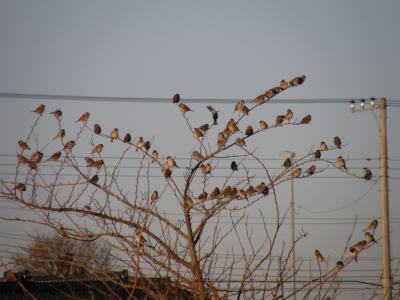 早朝散歩・・・清々しい快晴の空や山々と鳥たち朝の営みや植物の秋彩を見ながら歩けました