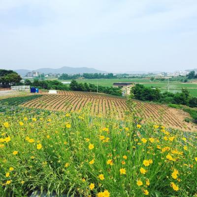 初夏の江華島