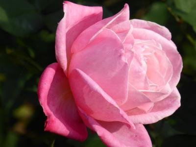 秋の優雅な「川口グリーンセンター」 ♪ Vol5:紅葉の風景と妖艶なバラを眺めて♪