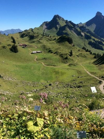 いつかある日ではおそい!スイスへGO! vol.11 澄み渡る天空の絶景に感動!!シーニゲプラッテ植物園ハイキング♪ヽ(^o^)/