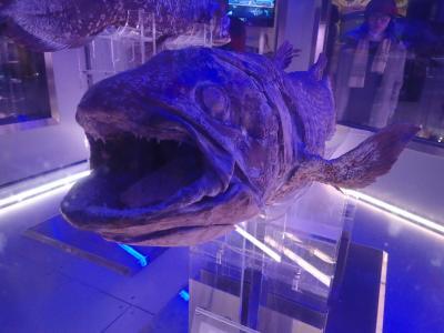 2016冬*行くぞ!沼津・深海魚を見る旅