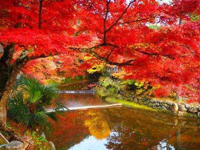 2016岩屋堂公園の紅葉