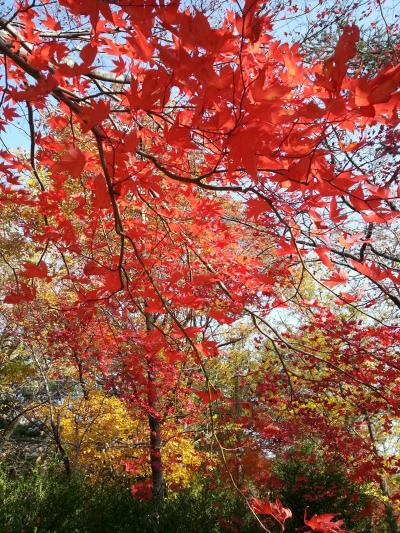 リベンジ!紅葉の雪岳山です!