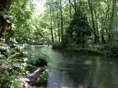 清冽な流れに沿って歩く「奥入瀬渓流」