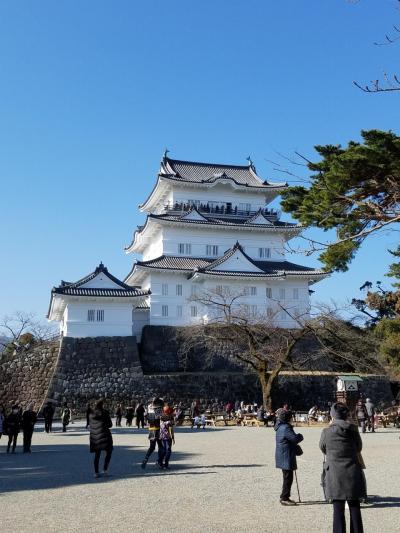 新春!小田原城を観光してきました♪