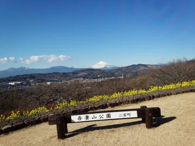 吾妻山公園の富士山