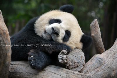 パンダに会いに中国(四川・広州)へ(全体)