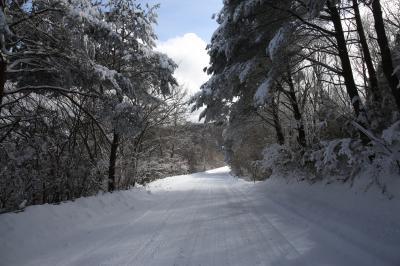 旅するイルカ♪ 低気圧 雪が降ったら 高野山 Part3