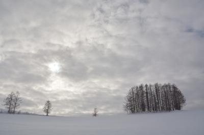 冬の美瑛を楽しむ旅  2日目  美瑛から札幌へ