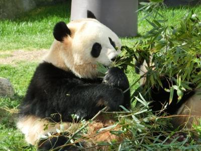 南紀白浜1泊2日 赤ちゃんパンダを見にアドベンチャーワールドへ