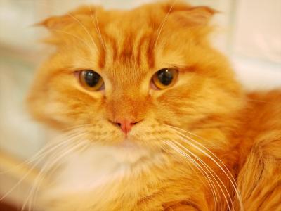 猫と温泉(2泊3日) Vol.3
