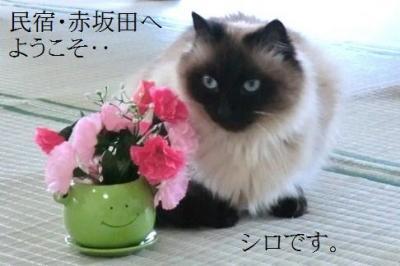 みちのく帰省&雪見旅・その2.夏とは別世界!白銀の民宿.赤坂田に帰る。
