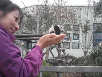 ちょっと寒いのね、青島。 青島動物園でパンダ。