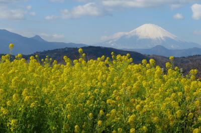 旅する乳幼児~吾妻山公園で春を感じる~