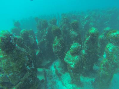★カリブ海「イスラムヘーレス」でのダイビング