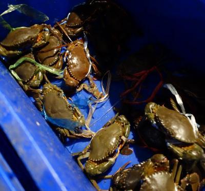パタヤ~トラート (250Km) ~ コラート (360Km)~パタヤ (350Km) パタヤ計960Km【トラートで買った蟹とムール貝は最高に美味かった】