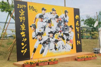 冬の沖縄といえばホエールウォッチングにプロ野球キャンプ。(阪神タイガースキャンプ編)