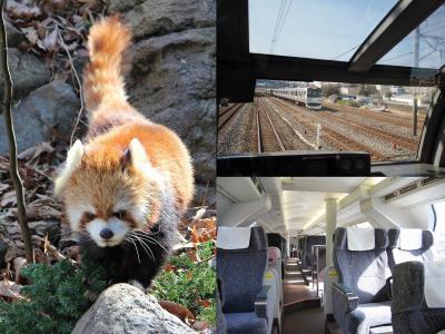 特急スーパービュー踊り子号 逆向き展望席に座って熱海から横浜に行こう 可愛いレッサーパンダに会いに「ズーラシア」へ