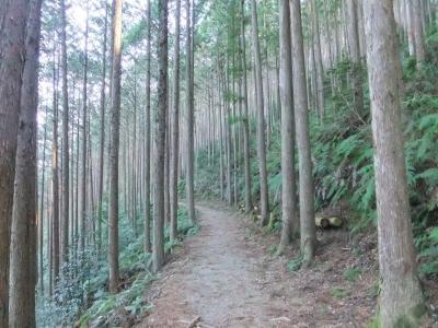 第22回紀州口熊野マラソンと熊野古道・白浜の旅