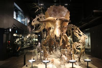 2016 NOV 思ってたより展示が充実してた御船(みふね)町恐竜博物館で発掘体験