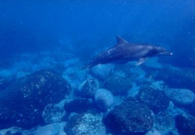イルカに会いに大人の夏合宿