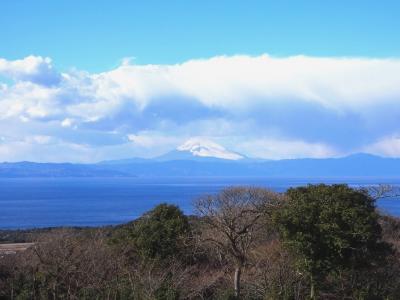 <早春の伊豆・花と海の節約旅・1>ココだって東京!椿と火山と青い海の「伊豆大島」へ