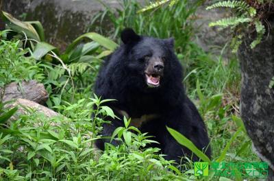 【台北】台北市立動物園