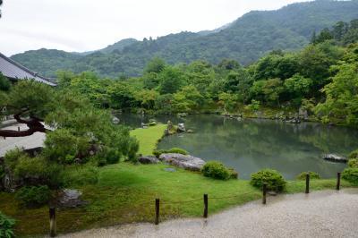 2泊3日、大阪泊京都小旅行 その4 「雨の嵐山。天龍寺」