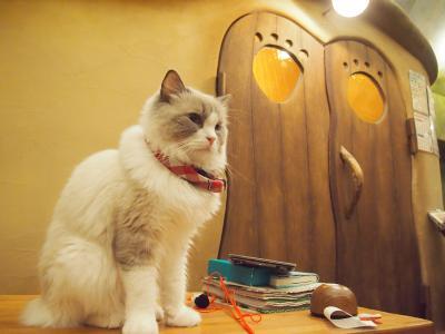 可愛らしい内装の吉祥寺にある猫カフェで猫に癒されてきました