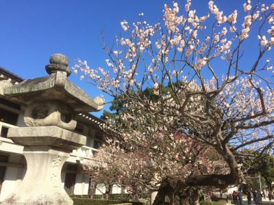 早春の九州(2)
