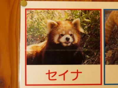 冬のレッサーパンダ紀行【6】 茶臼山動物園 さようなら・・・ありがとう!! 天国に旅立った茶臼の、そして、日本のレッサーの聖母・星奈さんに感謝の気持ちを伝えに行ってきました