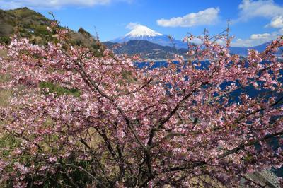 早春の薩埵峠へ、由比駅から往復