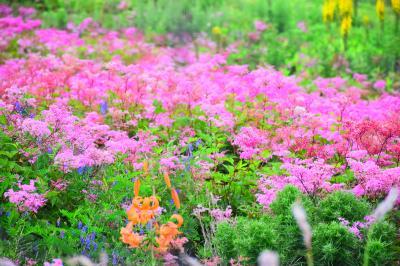 花の山、伊吹山へ