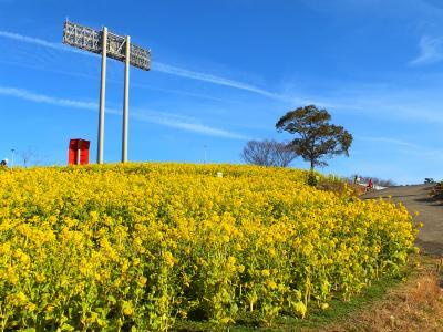 春色のじゅうたんを敷き詰めたような「コスモスの丘」
