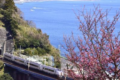 早春の根府川に咲くおかめ桜を見に訪れてみた(まだちょっと早かった?編)