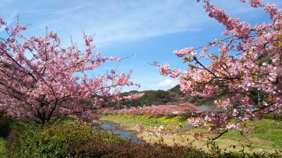 みなみの桜と菜の花まつり&赤沢温泉ホテル宿泊