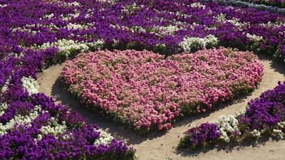 淡路島のトラフグ・昨年のリベンジ(02) 晴天の淡路花さじき。