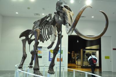 北海道博物館で、開墾期全国からの鍬が展示されていた
