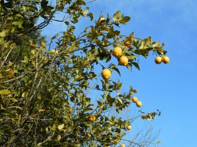 青いレモンの島とゆめしま海道