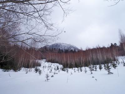 アカエゾマツの森散策