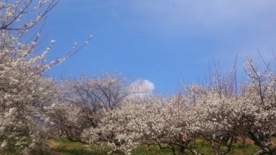 本沢梅園、城山湖