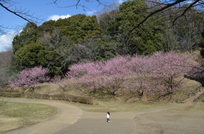 横浜花めぐり 寒桜、梅、ハナモモそして野鳥 三ッ池公園、四季の森公園