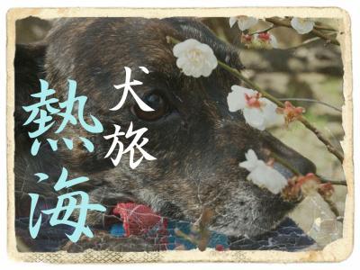 犬旅 ~熱海~