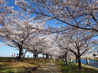 一時帰国★埼玉2★荒川の土手の桜を見に
