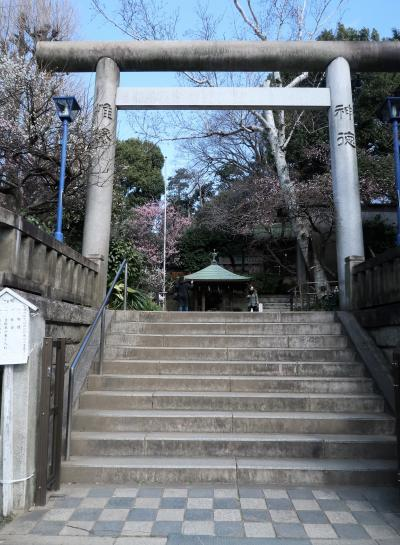 上野-1 五條天神社 梅と早咲き桜が咲きそろい ☆東博:春日大社展;の後に
