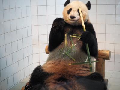 パンダと熊野古道の旅