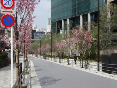 なだれ坂の桜 2017