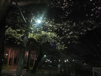 2017年の桜観賞・・・・・①善福寺川緑地公園夜桜