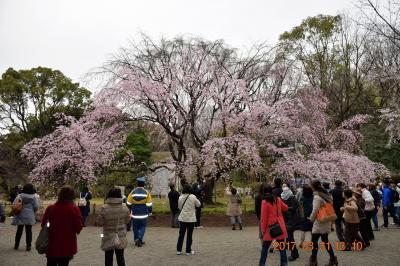 【東京散策62】 田園調布のまだ早かった桜坂と、5分咲きの六義園しだれ桜、播磨坂の桜をハシゴしました