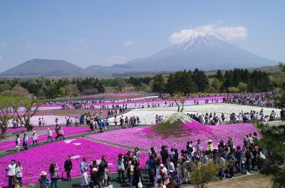[16]富士芝桜まつり